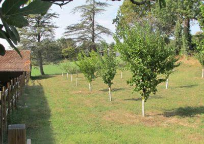 De nombreux arbres ont été plantés au domaine de la Potière